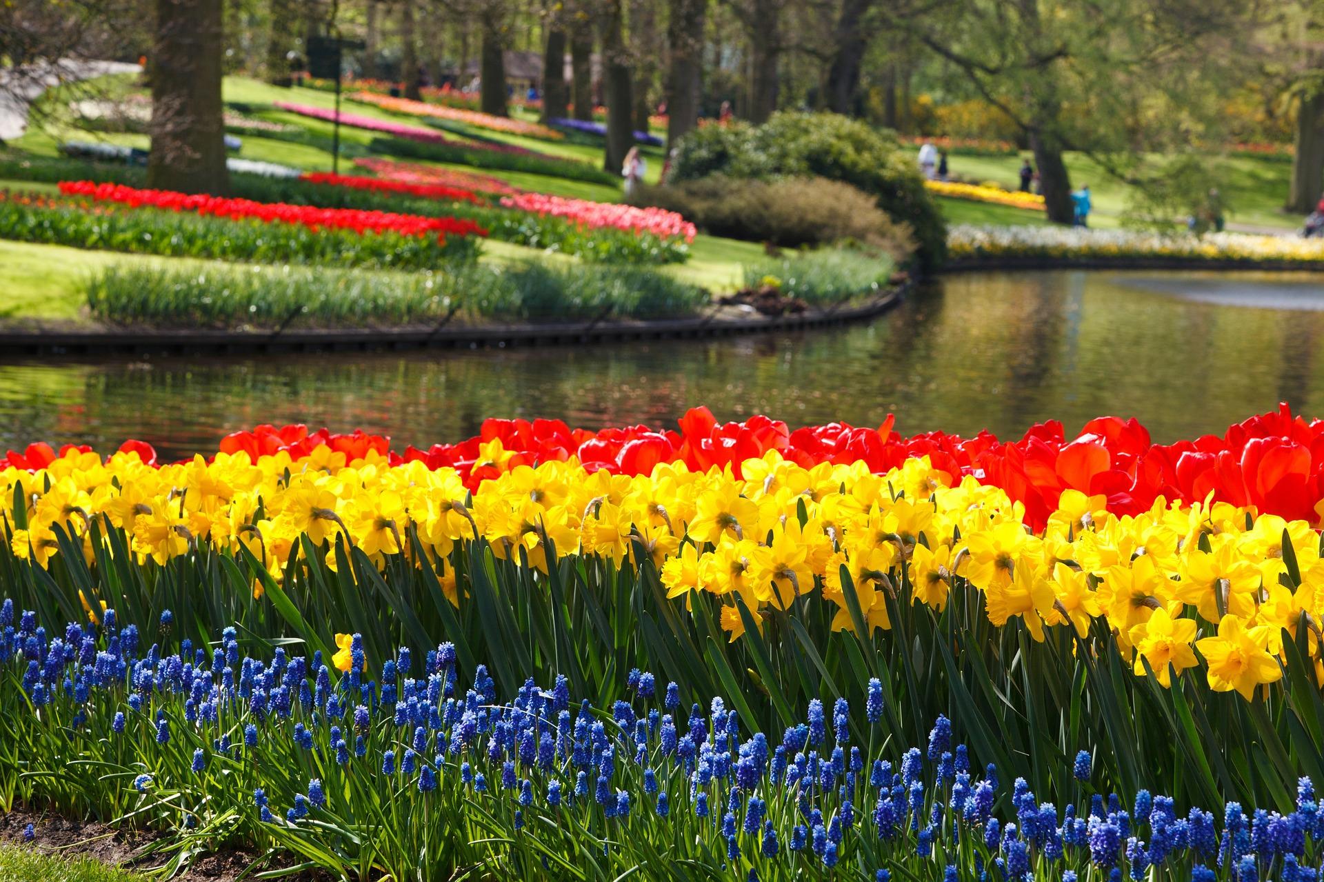 Narzissen, Tulpen im Park